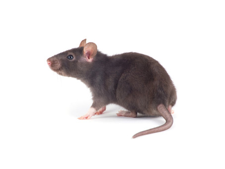 6 Signs of a Rodent Infestation