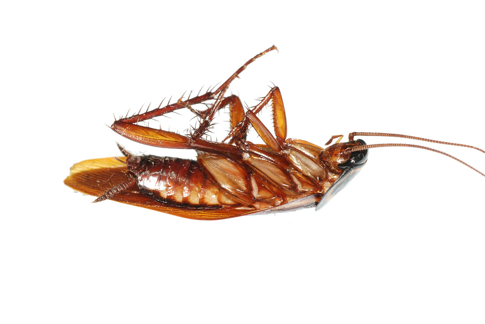 Cockroach Prevention