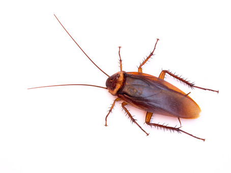 Roach Prevention Tips