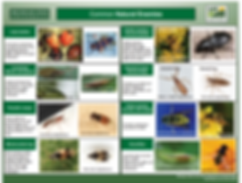Beneficial Insect Guide
