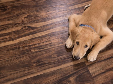 Will My Dogs Nails Scratch My Floor?