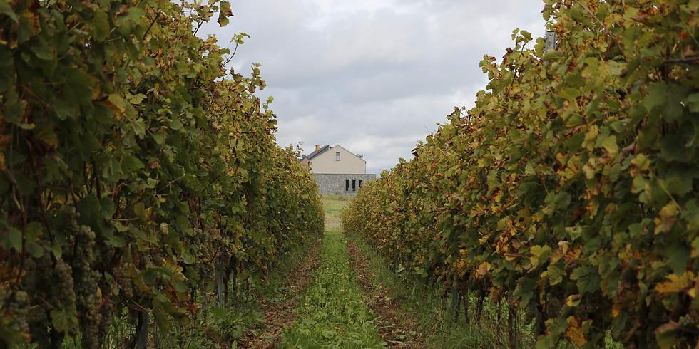 Journée dans les vignes : Effeuillage (Réservé aux coopérateurs)