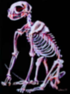 Cat Skeleton.jpg