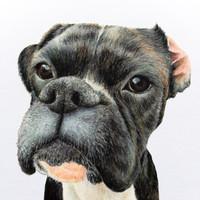 1-Subject (Dog)