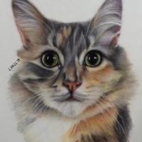 1-Subject (Cat)