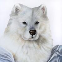 1-Subject (Dog); Partial Context
