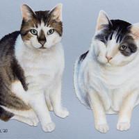 2-Subject (Cats)