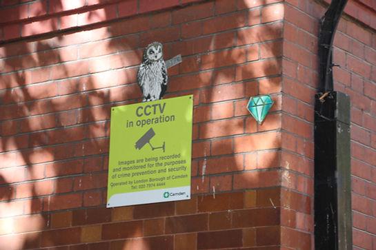 CCTV-owl.JPG