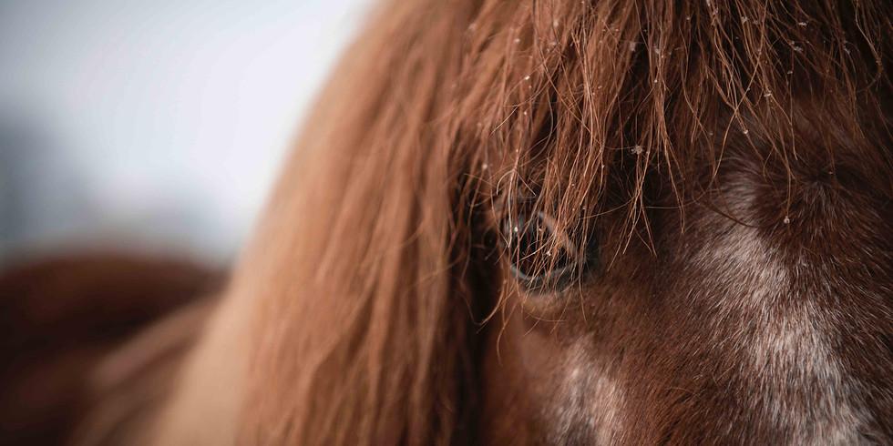 Traumaarbeit in der Reittherapie und der psychologischen Begleitung mit dem Pferd