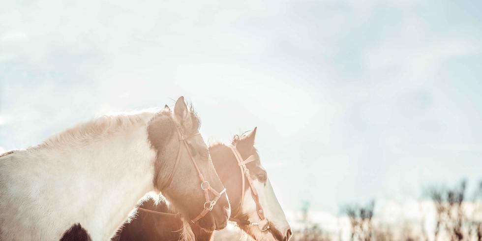 Horsemanship-Kurs mit Pferdeprofi Sandra Schneider