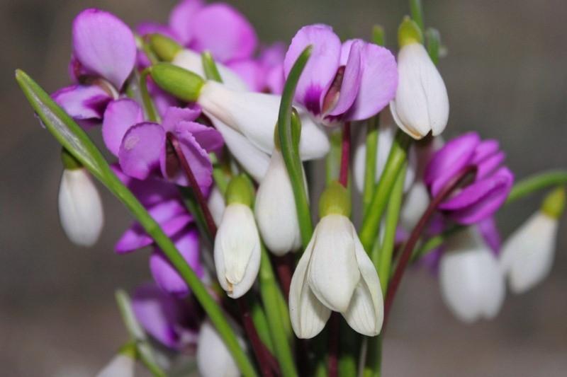 Как выбрать цветы #купить_кухню_в_Москве