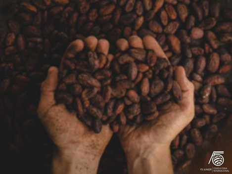 Inovações sustentáveis no mercado de chocolates: como e por que investir?