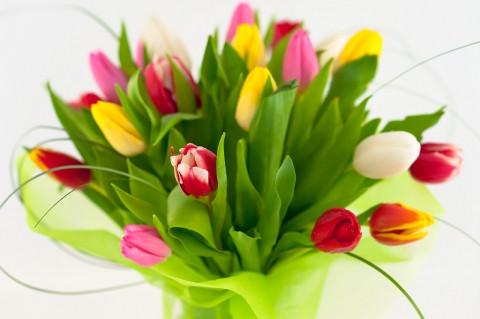 Как выбрать цветы #Alvalineкухникупить