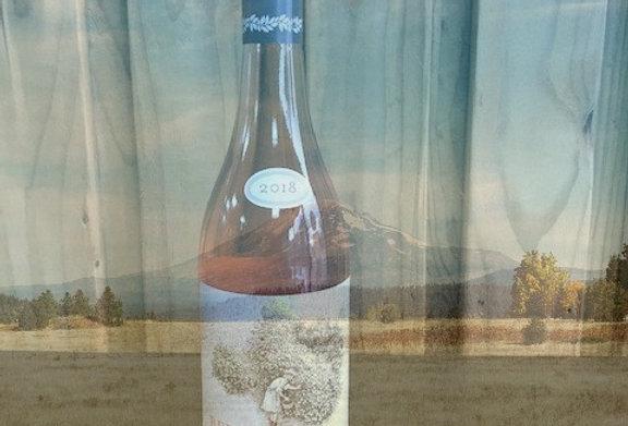 Bellingham Berry Bush Rose