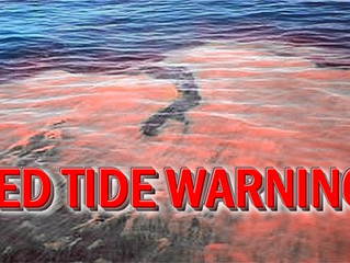 Red Tide in SW Florida