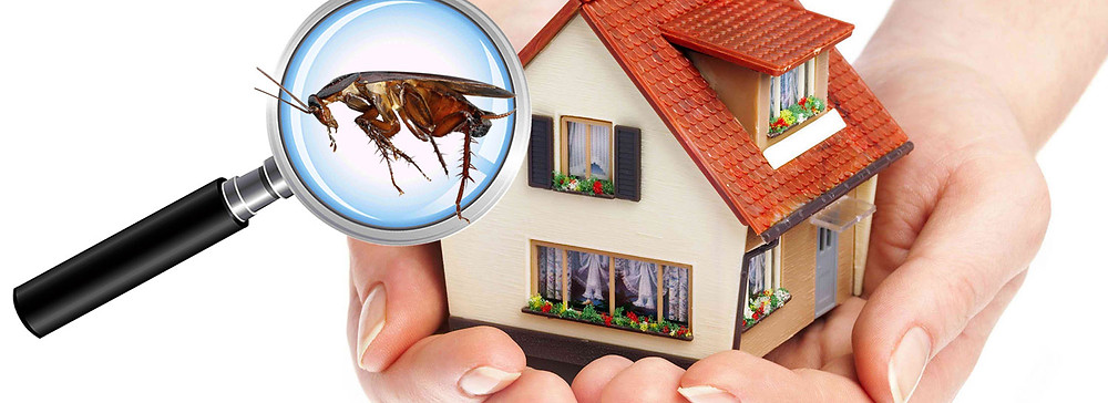 The importance of a pest inspection | Siesta Title