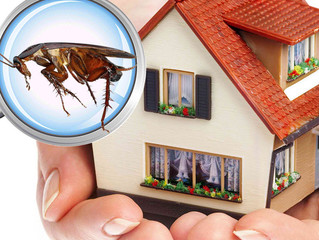The Importance of a Pest Inspection