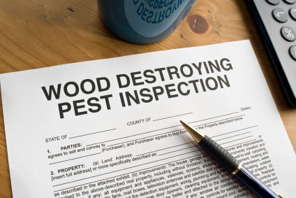 Wood Destroying Pest Inspection | Siesta Title