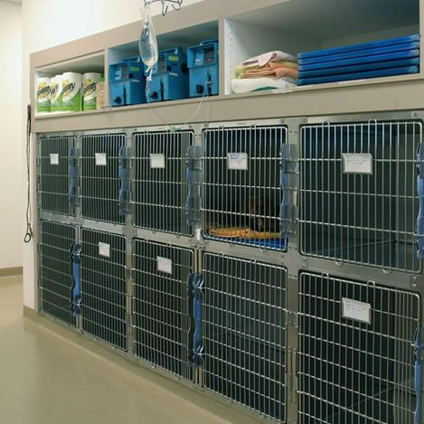 Small Animal Hospital & Recovery