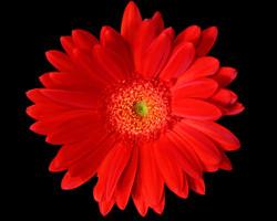 tlrphoto-fx-floral22
