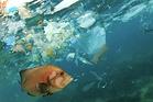 Fisch mit Müll.tiff