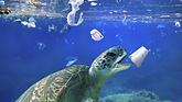 Schildkröte mit Müll.tiff