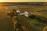 larger-for-tegan002_cullen_vineyard-and-