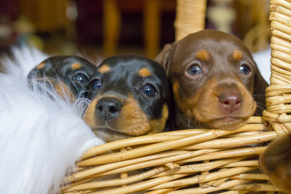 01-18 Puppies-9849.jpg