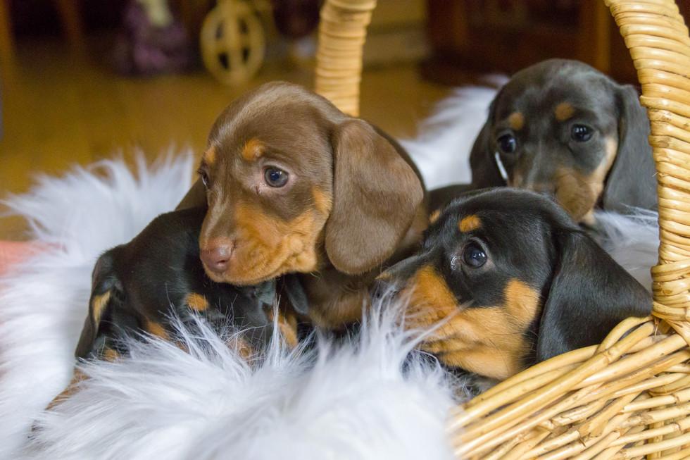 01-18 Puppies-9733.jpg