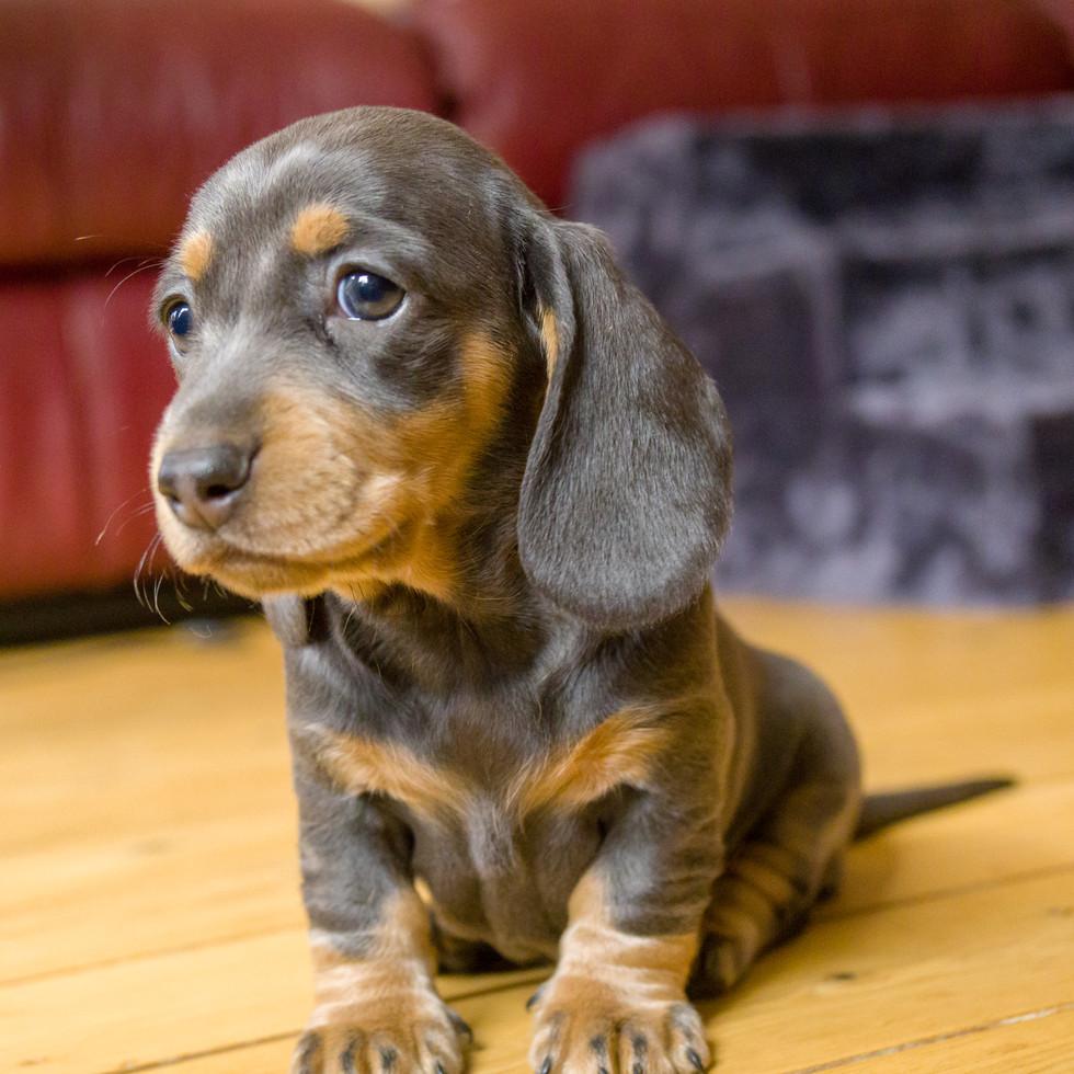 01-18 Puppies-9676.jpg