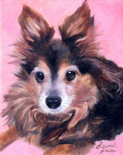 pet portraits, ragdoll kittens for sale