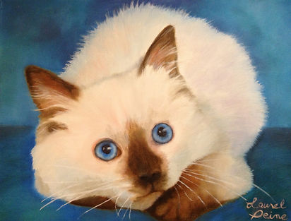 PET PORTRAITS | Ragdoll kittens | United States