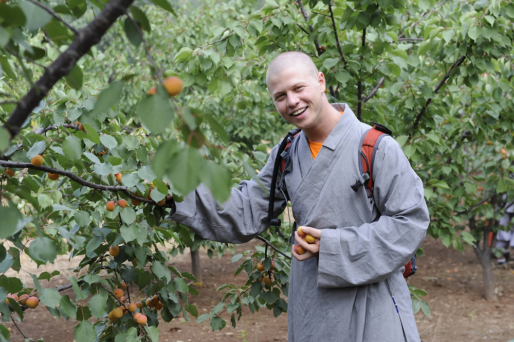 Ben picking apricots as a monk at the temple in China
