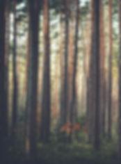 Forêt, arbre