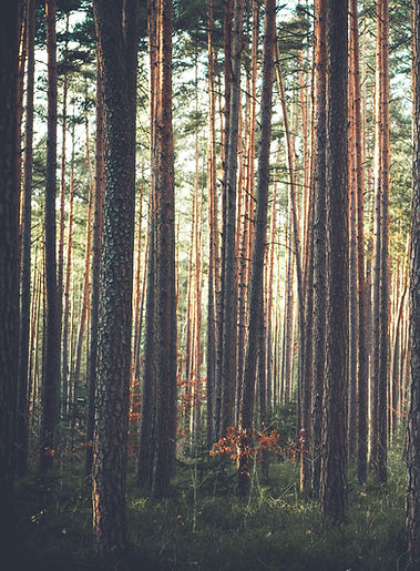 A forest as background for the contact information page