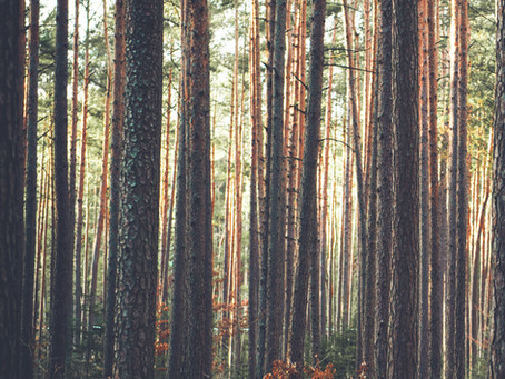 European Parliament AGRI Committee adopts balanced report on the EU Forest Strategy