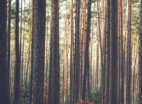 im wood wide web