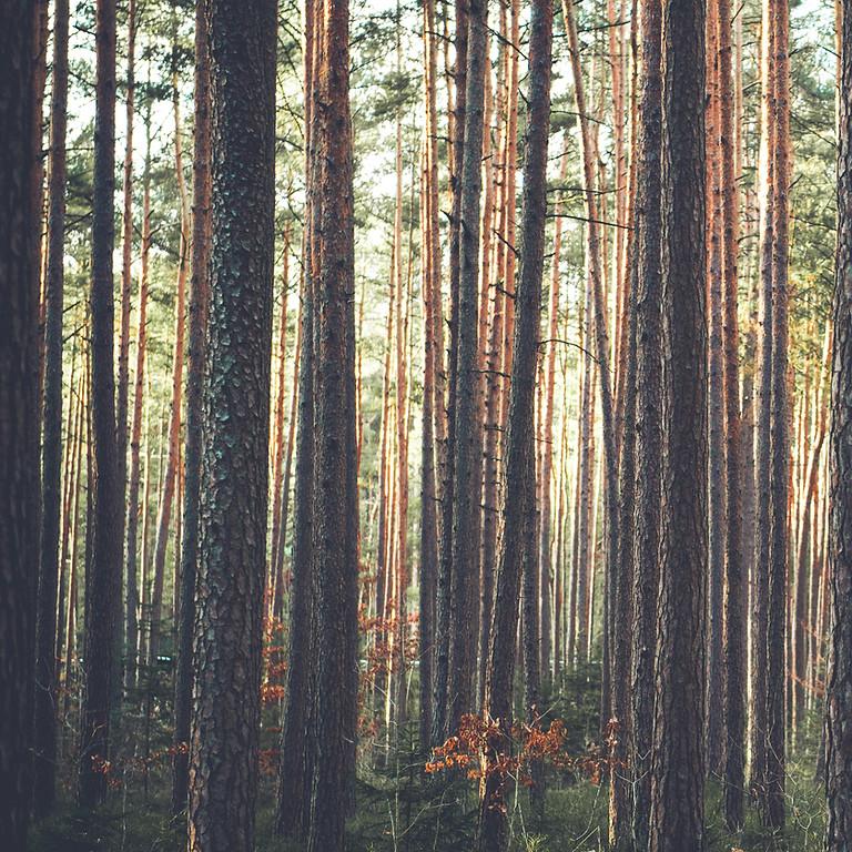 "Introduction to ""Shinrin-Yoku"" Forest Bathing"