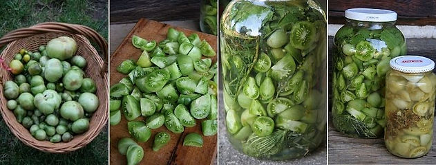 fermentovane pozdni leto_zelena rajcata.