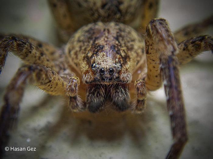 Spider 01 CR.jpg