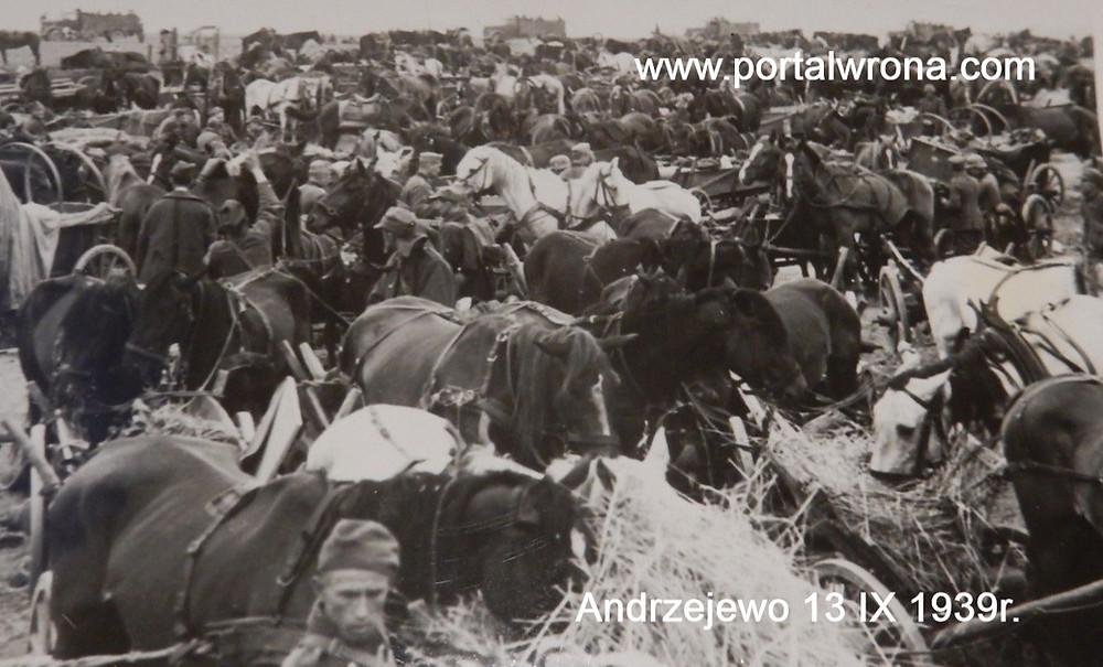 Jeńcy z 18 Dywizji Piechoty wśród taborów dywizyjnych w Andrzejewie