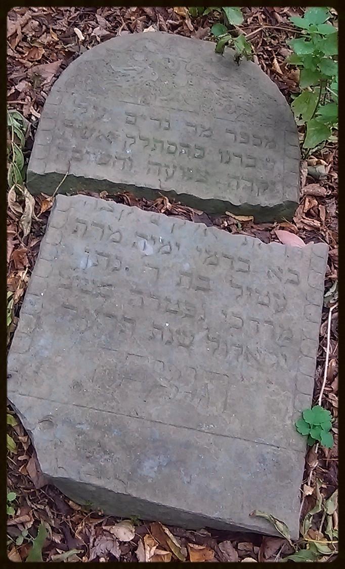 Etel – córka Natana Mordechaia – zm 8/23/1915r