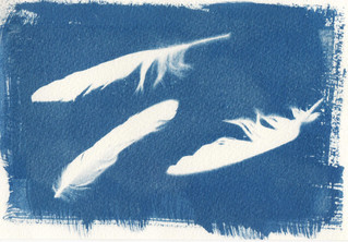 FEATHERS: MY FIRST CYANOTYPE
