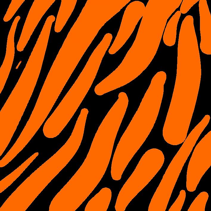 Zebra png.png