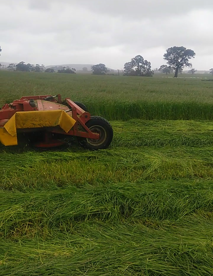 Silage Re-growth with Benchmark Ag. Spraying, Victoria