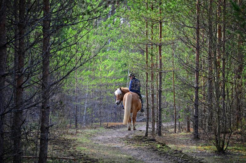 vrouw-en-paardrijden-bos-54626609