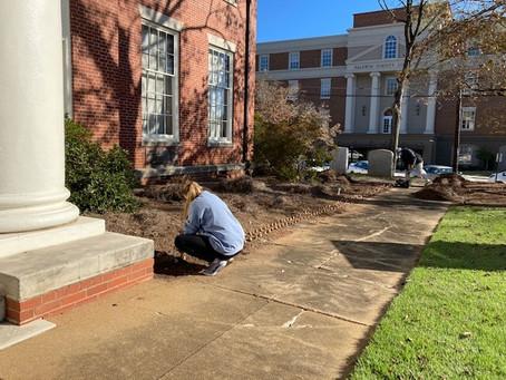 Georgia College Participates in 'The Daffodil Project'
