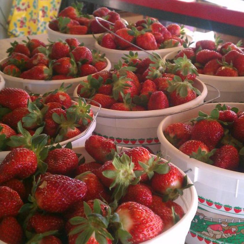 Smith's Nursery Strawberry Fun Family Spirit Day