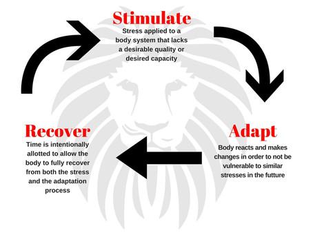 Body Basics: Exercise Processes