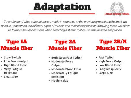 Body Basics: Adaptation- Part 1